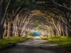percorso natura parco san rossore pisa